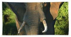 African Bull Elephant Hand Towel by Joseph G Holland
