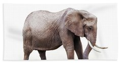 African Elephant Grazing - Isolated On White Hand Towel