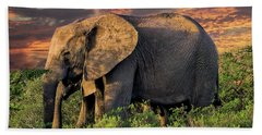 African Elephants At Sunset Hand Towel