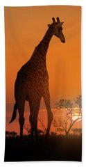 African Giraffe Walking At Sunset Hand Towel
