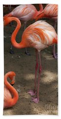 African Lesser Flamingos, Ft. Worth Zoo Bath Towel