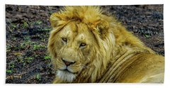 African Lion Close-up Bath Towel