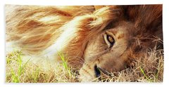 African Lion Closeup Lying In Grass Bath Towel