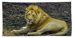 African Lion   Hand Towel