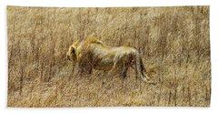 African Lion Stalking Hand Towel