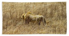 African Lion Stalking Bath Towel