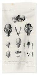 African Mammal Skulls Bath Towel