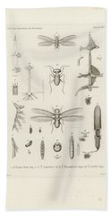 African Termites And Their Anatomy Hand Towel