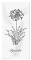 Agapanthus Flower Botanical Drawing Black And White Hand Towel