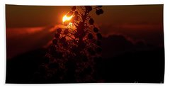 Hand Towel featuring the photograph Ahinahina - Silversword - Argyroxiphium Sandwicense - Sunrise by Sharon Mau