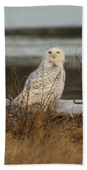 Alert Snowy Owl Hand Towel