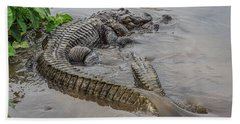 Alligators Courting Bath Towel