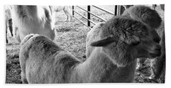 Alpaca Meeting  Hand Towel