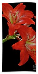 Hand Towel featuring the photograph Amaryllis by AnnaJo Vahle