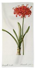Amaryllis Curvifolia Hand Towel by Pierre Redoute