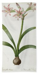Amaryllis Vittata Hand Towel by Pierre Redoute