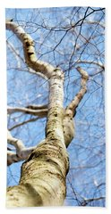 Hand Towel featuring the photograph American Beech Tree by Christina Rollo