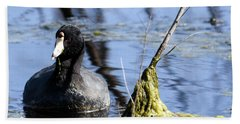 Bath Towel featuring the photograph American Coot by Gary Wightman