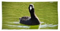 American Coot Portrait Bath Towel