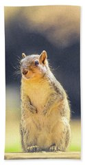 American Red Squirrel Hand Towel