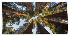 Amongst The Giant Sequoias Hand Towel by Alpha Wanderlust