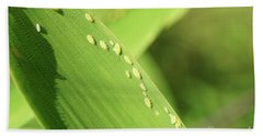 Aphid Family Hand Towel