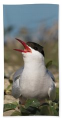 Arctic Tern - St John's Pool, Scotland Bath Towel