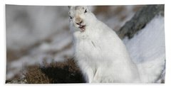 Are You Kidding? - Mountain Hare #14 Bath Towel