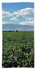 Arizona Cotton Field Hand Towel