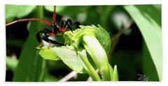 Hand Towel featuring the photograph Assassin Bug by Meta Gatschenberger