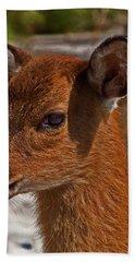 Assateague Island Sika Deer Fawn Hand Towel