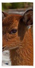 Assateague Island Sika Deer Fawn Bath Towel