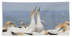 Australasian Gannets Courting Hand Towel