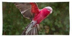 Australian Galah Parrot In Flight Bath Towel