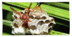 Australian Papper Wasp 772 Hand Towel