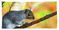 Hand Towel featuring the photograph Autumn Squirrel by Karol Livote