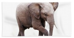 Baby African Elephant Isolated On White Bath Towel