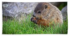 Baby Groundhog Eating Hand Towel by Bob Orsillo