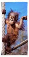 Baby Orangutan Climbing Bath Towel by Stephanie Hayes