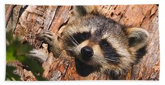 Baby Raccoon Hand Towel by William Jobes