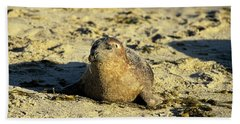 Baby Seal In Sand Hand Towel