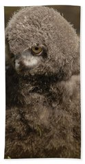 Baby Snowy Owl Hand Towel