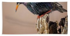 Backyard Birds European Starling Square Hand Towel by Bill Wakeley