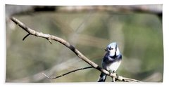 Backyard Blue Jay Hand Towel