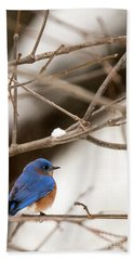 Backyard Bluebird Hand Towel