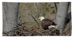 Bald Eagle 01 Hand Towel by Ann Bridges