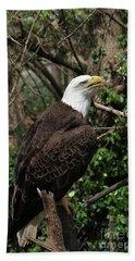 Bald Eagle #7 Hand Towel