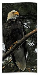 Bald Eagle Hand Towel by Glenn Gordon