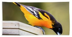 Baltimore Oriole About To Jump Hand Towel by Ricky L Jones
