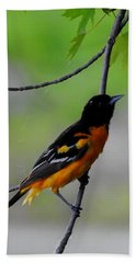 Hand Towel featuring the photograph Baltimore Oriole by Betty-Anne McDonald